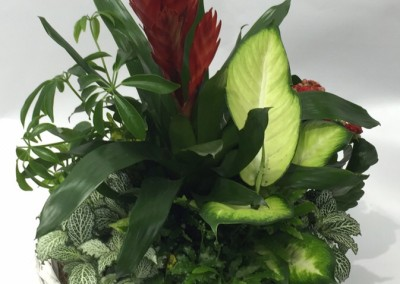 Cesta plantas naturales