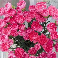 Flores temporada