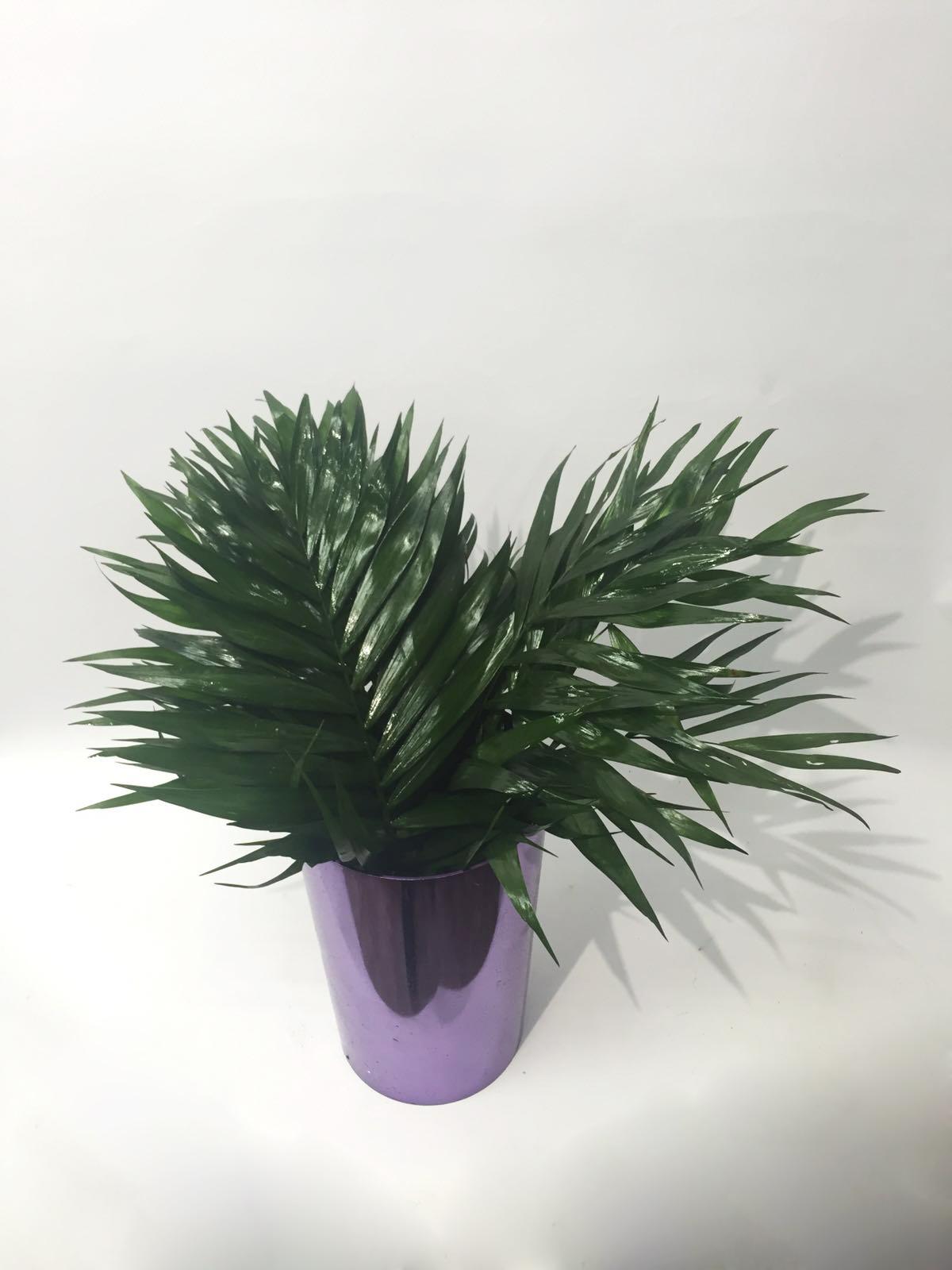 Hojas para arreglos florales - floryfauna