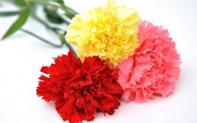 ¿Cuáles son las flores más bonitas para regalar el Día de la Madre?