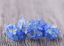 No Me Olvides Una Flor Perfecta Para Ti