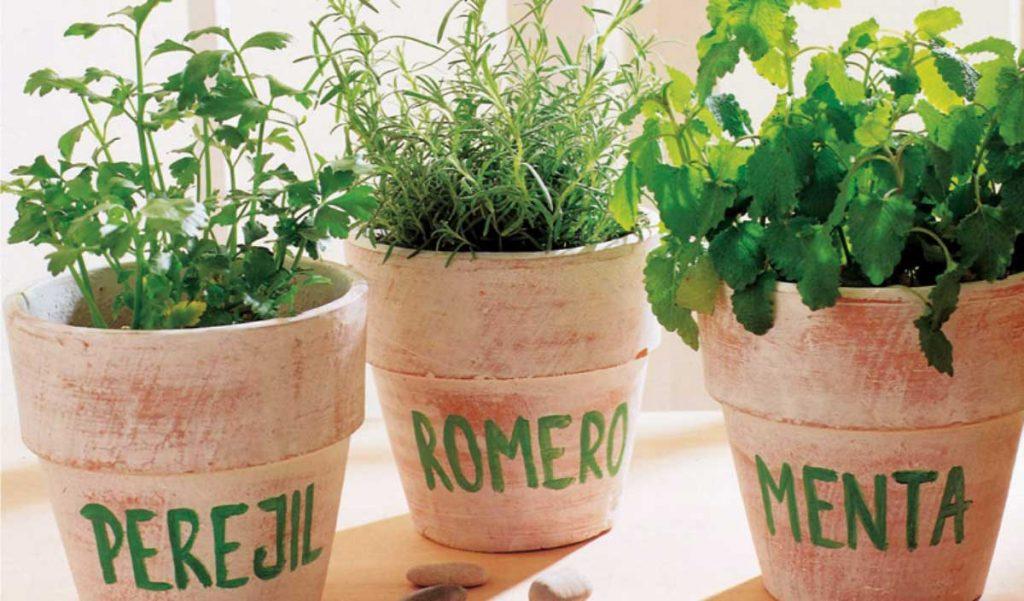 Cuales son las hierbas arom ticas m s utilizadas en la - Plantas aromaticas en la cocina ...