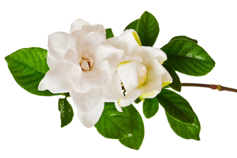 5 flores diferentes para regalar en el d a de san valent n - Plantas pequenas para regalar boda ...