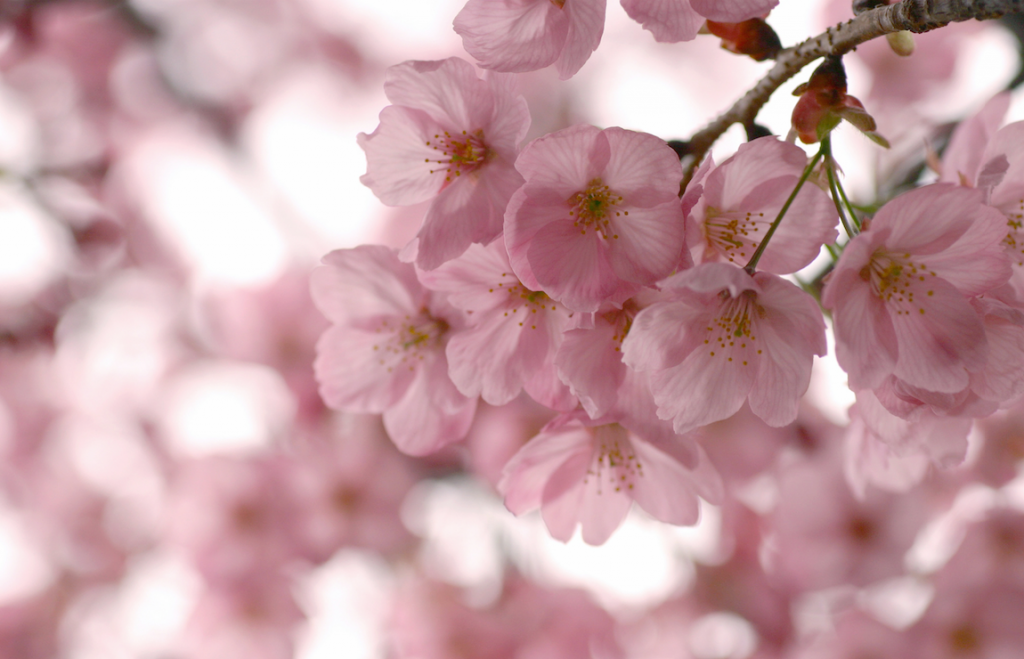 Qu factores debo tener en cuenta para cuidar las flores en primavera