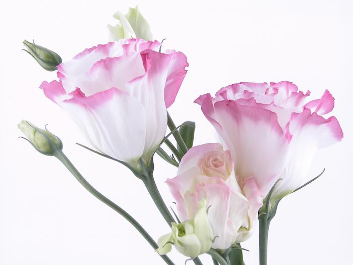 Cuales Son Las 10 Flores Mas Exoticas Y Caras Del Mundo