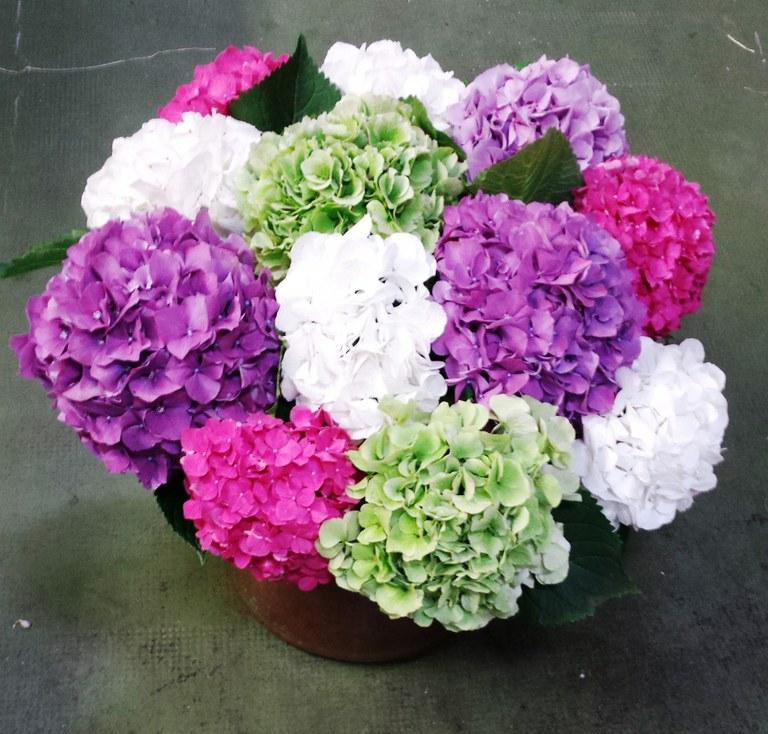 Cuales son las 10 flores m s ex ticas y caras del mundo - Cuidados de una hortensia ...
