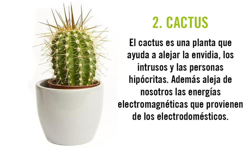 10 plantas que act an de im n para la energ a positiva - Como llenar la casa de energia positiva ...