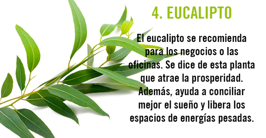 10 plantas que act an de im n para la energ a positiva for Plantas que se deben tener en casa segun feng shui