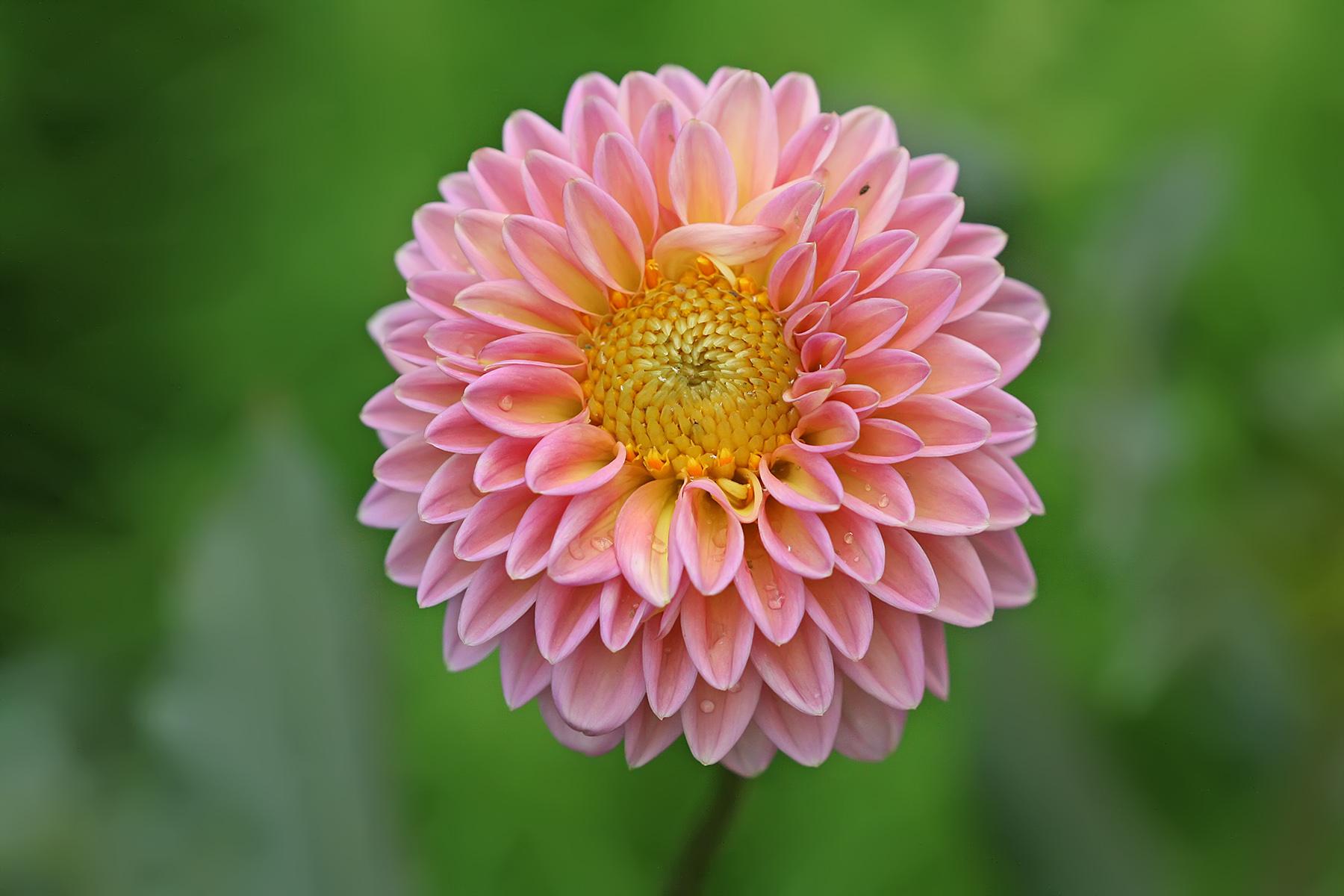 Cu les son las plantas m s bonitas de los meses de verano for Las plantas mas bonitas