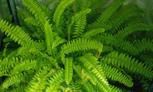 Qu plantas son beneficiosas para nuestro hogar seg n el for Plantas para tener en casa segun el feng shui