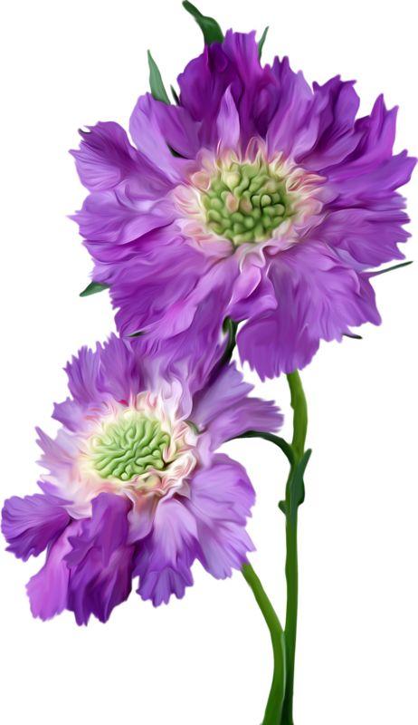 flor mes de nacimiento aster