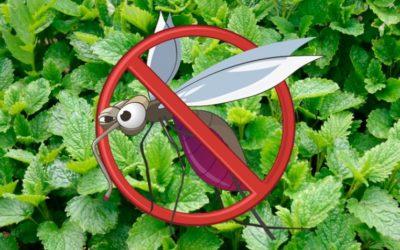 5 plantas que actúan como repelentes de mosquitos