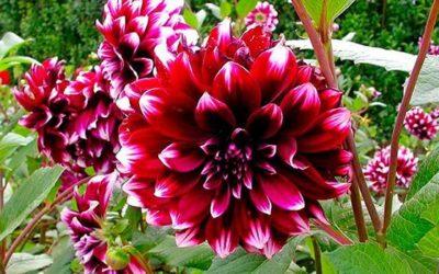 ¿Qué plantas o flores suelen florecer durante el mes de Octubre?
