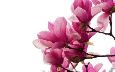 ¿Cuáles son las flores más originales para regalar?