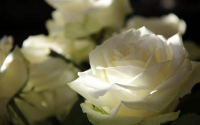 ¿Por qué llevamos flores a nuestros difuntos?