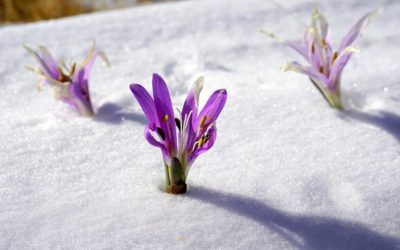 A punto de comenzar el invierno ¿Qué debo hacer para que mis plantas sobrevivan a las bajas temperaturas?