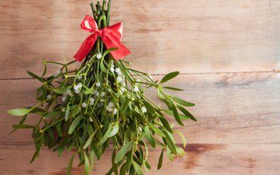 ¿Preparando la navidad? ¿Qué flores y plantas regalar?