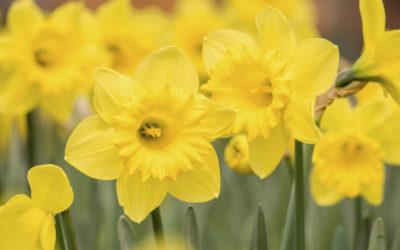 ¿Qué significa soñar con flores amarillas?