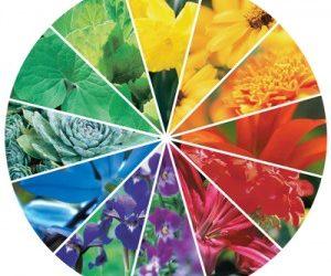 ¿Cómo debemos combinar los colores de las flores para que encajen a la perfección?