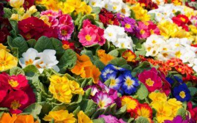¿Cuáles son las plantas que mejor florecen en los meses de la primavera?