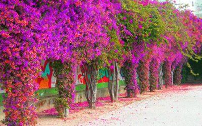 ¿Cuáles son las flores por excelencia del verano?