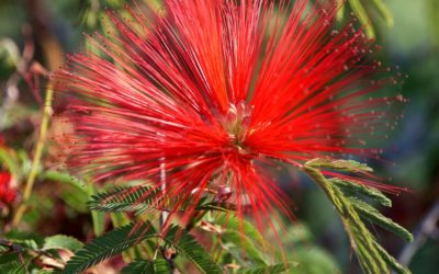¿Qué flores resisten mejor al sol en verano?