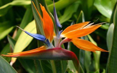¿Cuáles son las flores que más tardan en marchitarse?