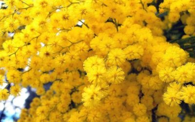 ¿Cuáles son las flores que mejor soportan el frío?