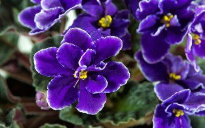 ¿Cómo saber cuál es tu flor favorita?